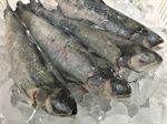 RAINBOW TROUT - 200 - 350gr